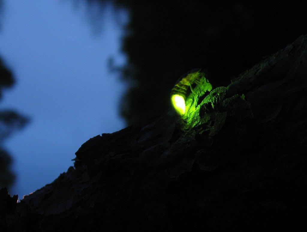Bhandardara Lake Fireflies Camping
