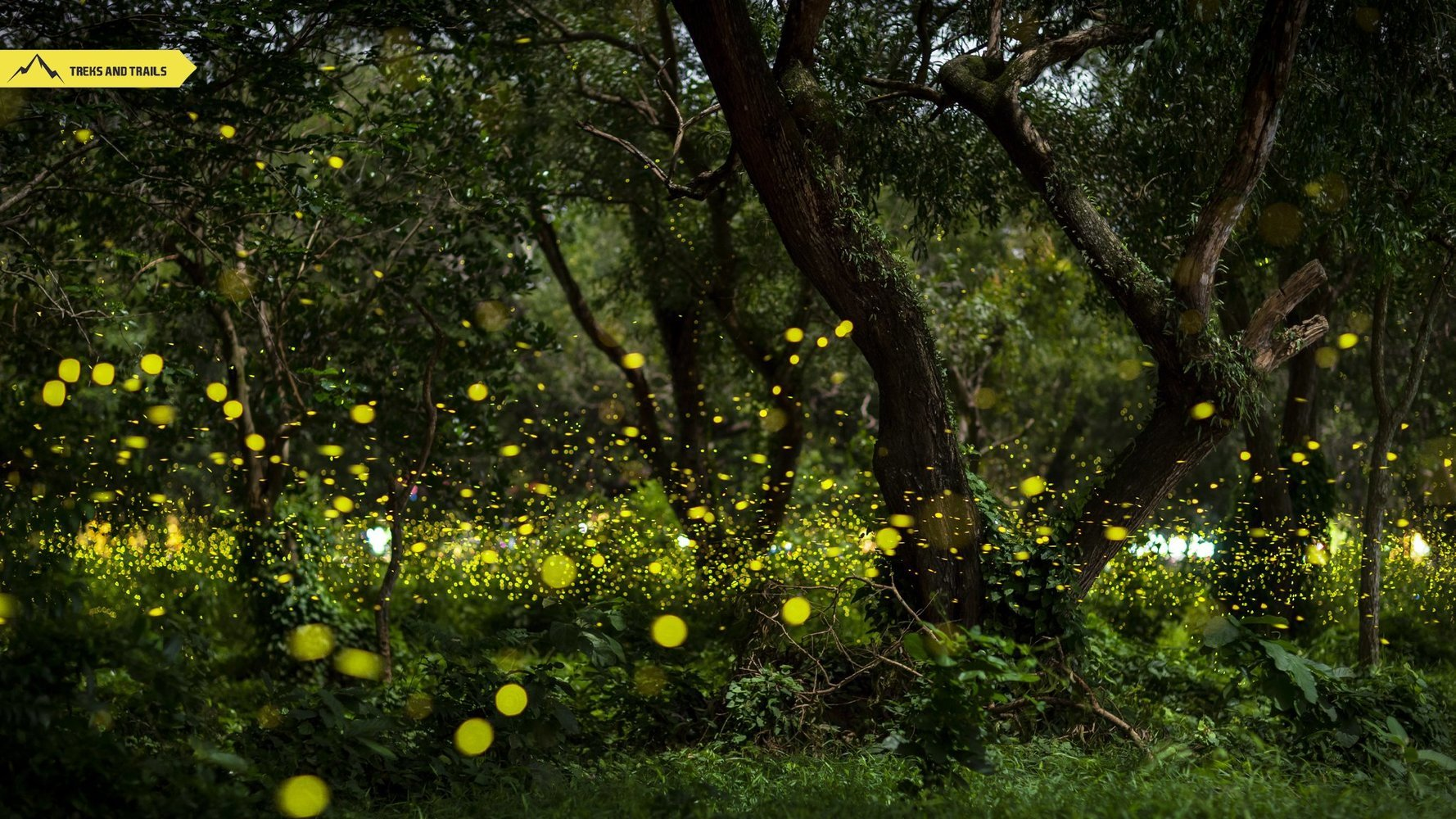 Igatpuri Fireflies Camping